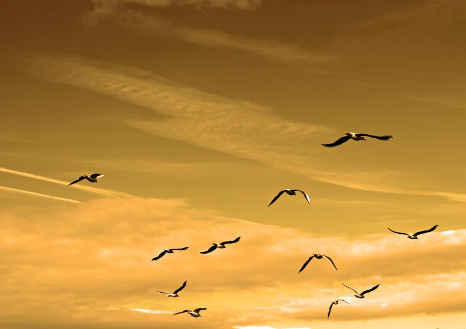 אגמון חפר פארק הציפורים