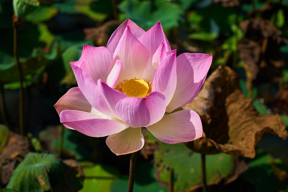 תמונה של פרח באזור שופע טבע